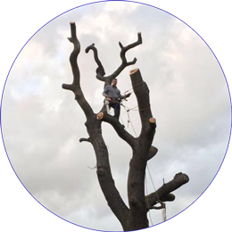 Tree Specialist across North London, Essex and Hertfordshire.