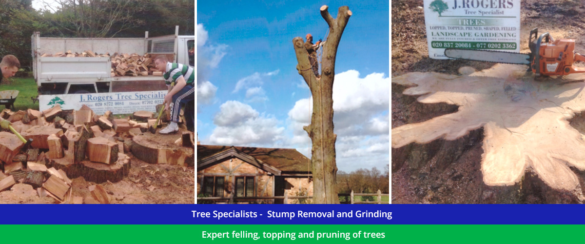 Professional Tree and Stump Specialists across North London, Essex and Hertfordshire